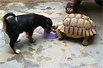 Puppy Meets Tortoise